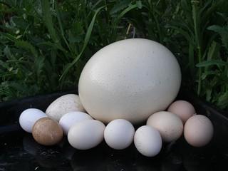 Яйца разные