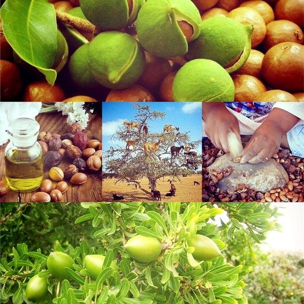 Аргановое дерево и масло