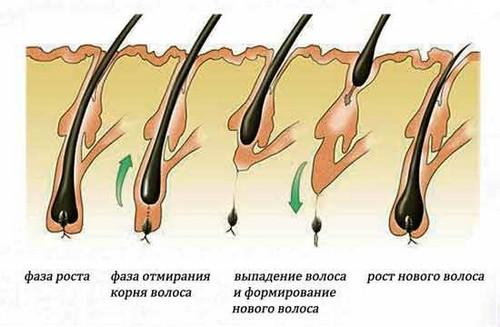 Выпадение и новый рост волос
