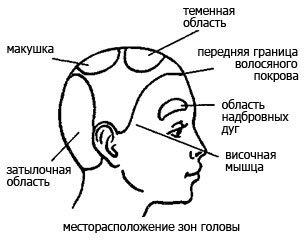 Деление головы на зоны